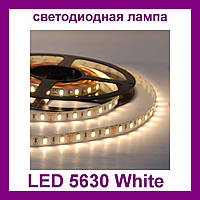 Лента светодиодная белая LED 5630 White - 5 метров в силиконе
