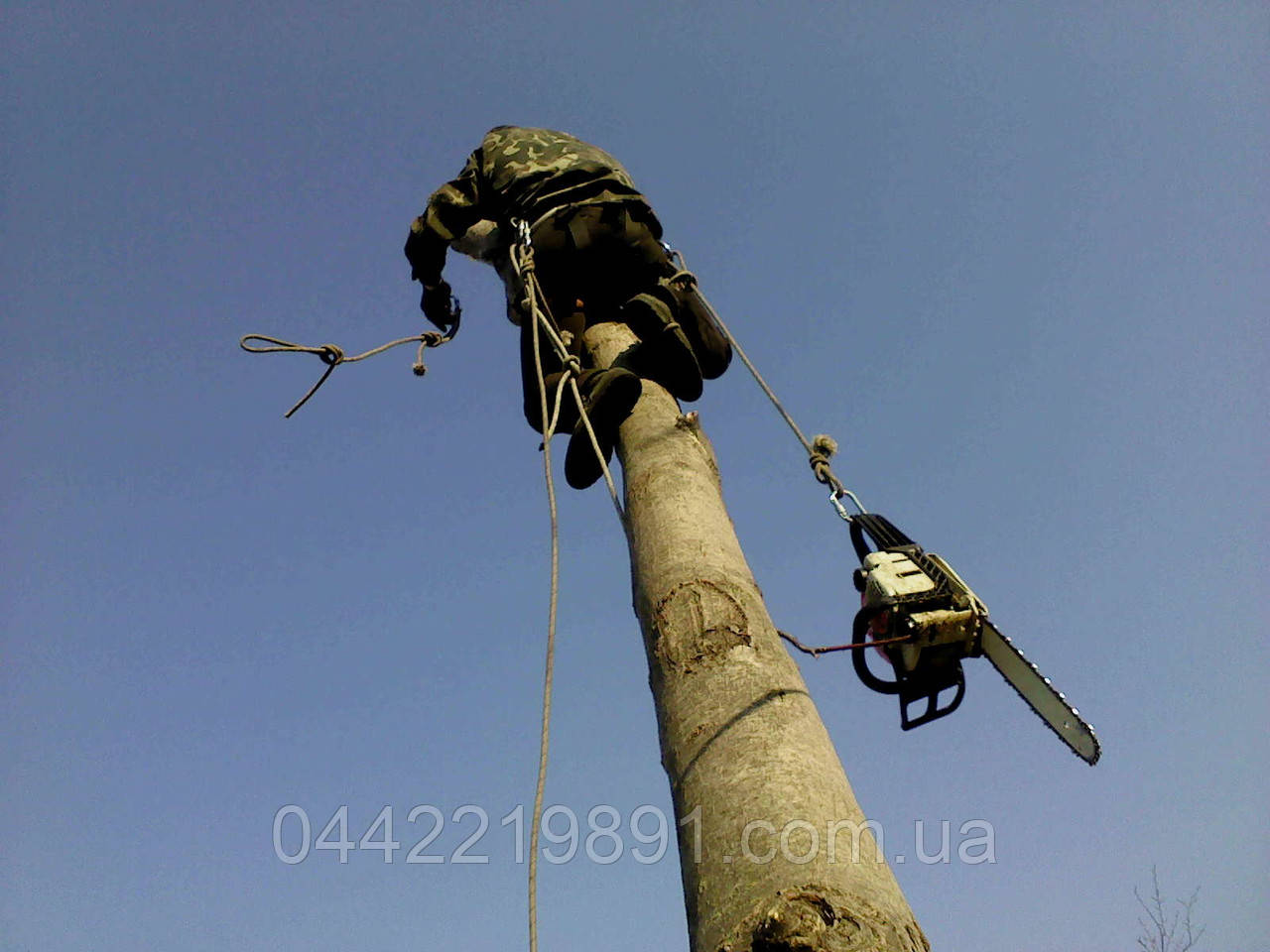 Удаление опасных деревьев Спиливание опасных, аварийных деревьев Удаление деревьев