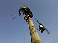 Удаление опасных деревьев Спиливание опасных, аварийных деревьев Удаление деревьев, фото 1