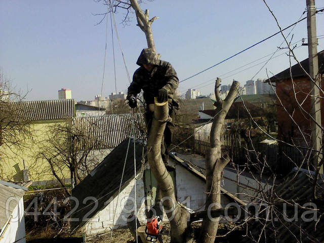 Удаление опасных деревьев. Срезка аварийных деревьев.  Уборка опасных деревьев.  Валка опасных деревьев.  Спил опасных деревьев.  Спиливание опасных деревьев.  Схемы уборки опасных, аварийных деревьев.