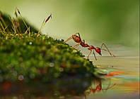 Уничтожение вредных насекомых