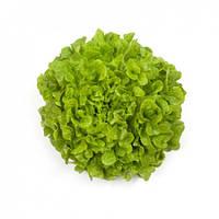 Семена салата Кирибати 1000 сем.Рийк цваан.