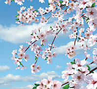 Фотообои Ника  Цветущая сакура 140х145 см (6 листов)