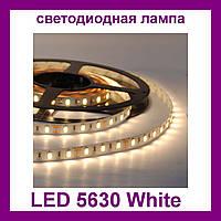 Лента светодиодная белая LED 5630 White - 5 метров в силиконе!Опт