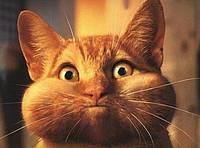 Витамины для кошек обеспечат ей долгую жизнь.