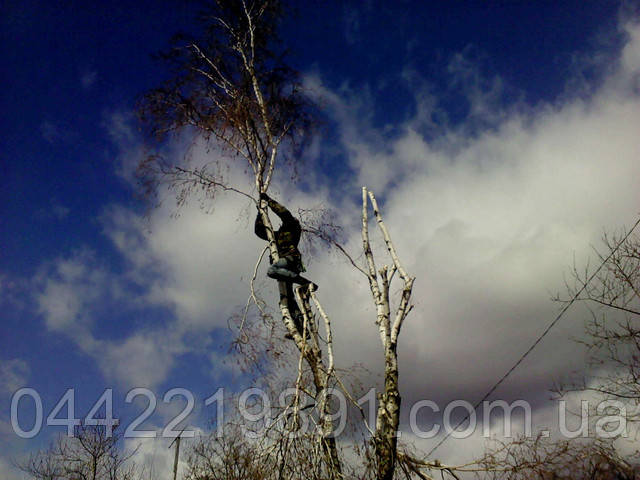 Валка деревьев с помощью альпинистов