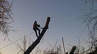 Срезать дерево (сосна, дуб, тополь) Спил опасных деревьев, удаление деревьев с участка