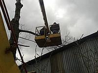 Срезание деревьев с автовышки Спил, вырубка деревьев и кустов Спиливание деревьев недорого