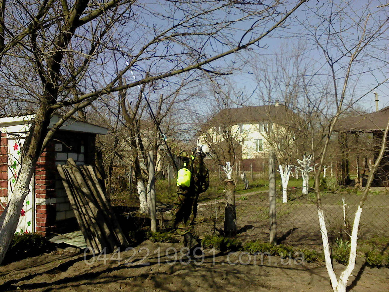 Уход за яблоней осенью – подготовка к зиме: обрезка, подкормка ... | 960x1280