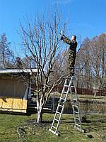 Профессиональная обрезка деревьев сада и участка Уход за садом Уход за участком Обрезка деревьев