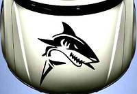 Виниловая наклейка на авто - на капот(акула)