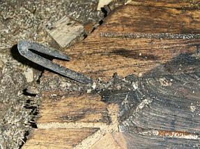 При удалении ствола, в комлевой части  на глубине 10 см цепь бензопилы наткнулась на металлическую скобу.В результате чего у цепи было оторвано 2 зуба.