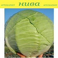Капорал F1 насіння капусти б/к середньої Clause 10 000 насінин