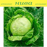 Сателит F1 (Satelite F1) семена капусты белокачанной средней Bejo 500 семян