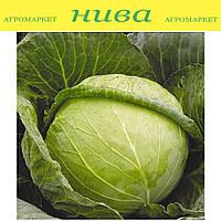 Авак F1 семена капусты белокачанной средне поздней Moravoseed 2 500 семян