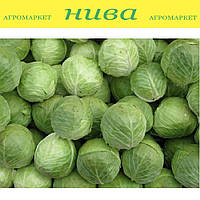 Адаптор F1 семена капусты Syngenta 2 500 семян