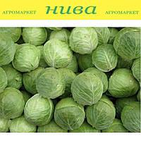 Адаптор F1 семена капусты Syngenta 500 семян