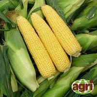 Семена кукурузы Сириус 1000 сем. Agri Saaten