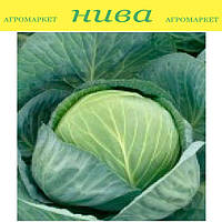 Бузони F1 семена капусты белокачанной поздняя калибр. Hazera 2 500 семян