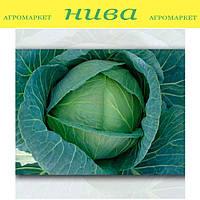 Коронет F1 семена капусты белокачанной средне-поздней Sakata 10 000 семян