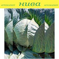 Структа TСа-432 F1 семена капусты белокачанной средне-поздней Takii Seeds 2 500 семян