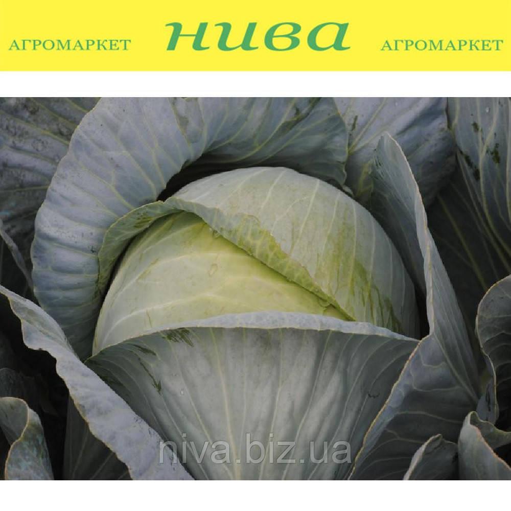 Гарантия F1 cемена капусты белокачанной поздней Lucky Seed 2 500 семян