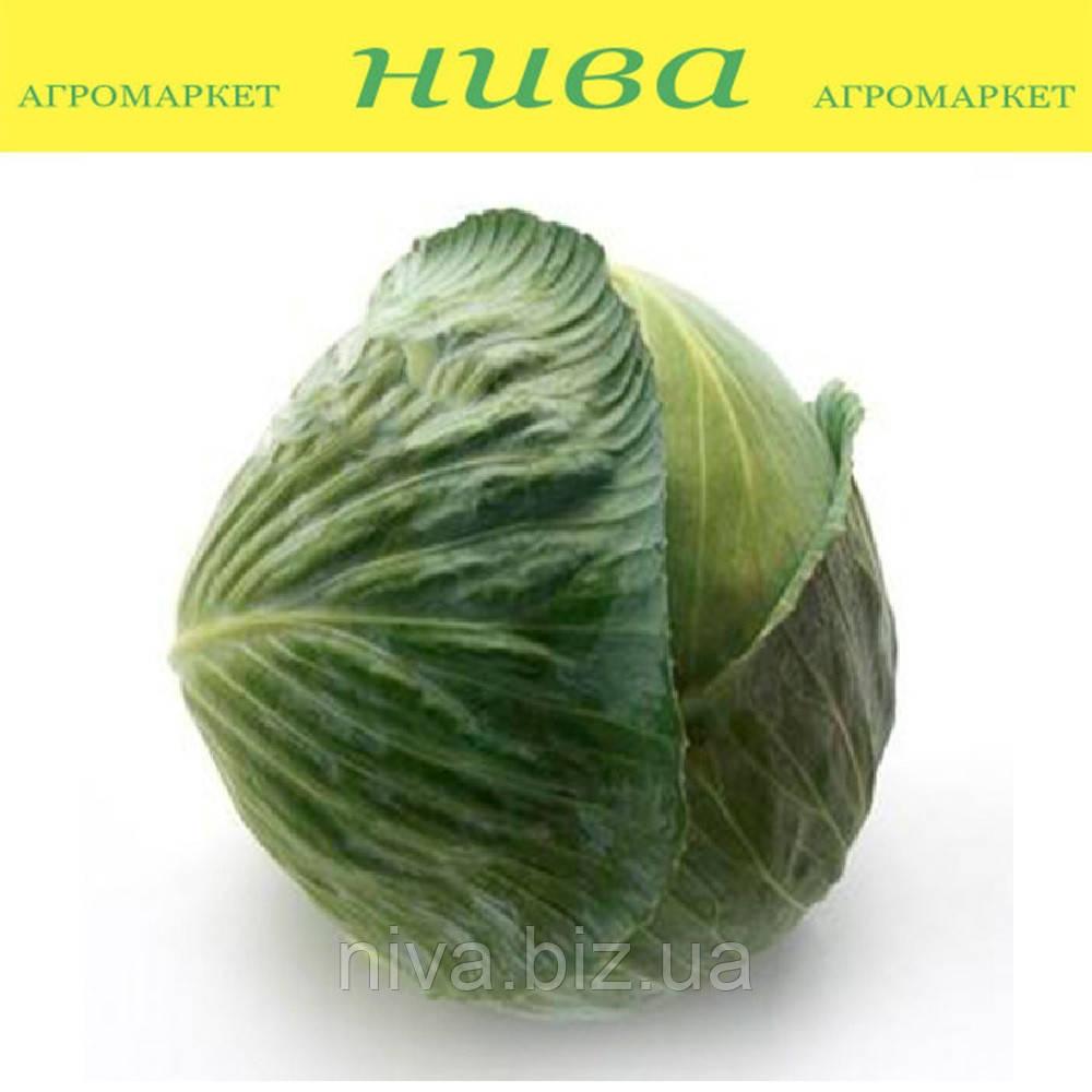 Лагрима F1 (Lagrima F1) семена капусты белокачанной поздней калибр. Rijk Zwaan  2 500 семян
