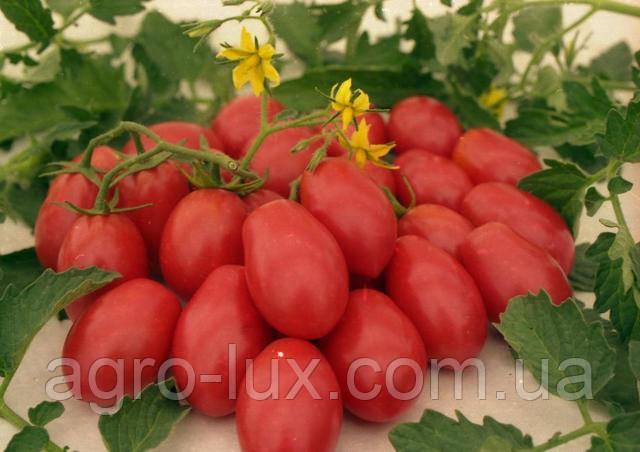 Семена помидор для теплиц