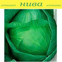 Ярославна семена капусты белокачанной поздней Euroseed 500 г