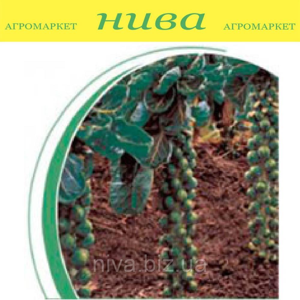 Бриллиант F1 семена капусты брюссельской Hazera 250 семян
