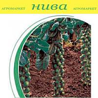 Бриллиант F1 семена капусты брюссельской Hazera 100 семян