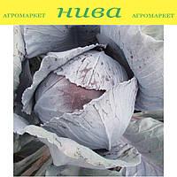 Авангард F1 семена капусты краснокачанной среднепоздняя Semenaoptom 1 000 семян