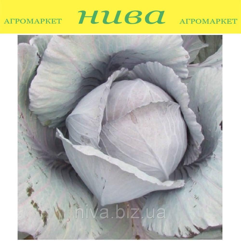 Модерат F1 семена капусты краснокочанной Moravoseed 2 500 семян