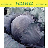 Квит F1 семена капусты краснокочанной Moravoseed 2 500 семян