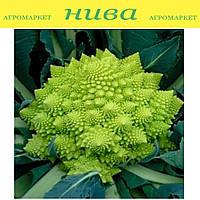 Вероника F1 (Veronica F1) семена капусты романеско Bejo 25 семян