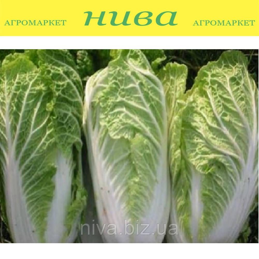 Білко F1 (Bilko F1) насіння капусти пекінської Bejo 10 000 насінин