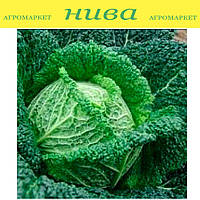 Блистра F1 семена капусты савойской Moravoseed 2 500 семян