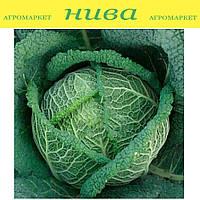Вироса F1 (Wirosa F1) семена капусты савойской Bejo 500 семян