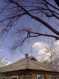 Удаление  дуба росшего возле дома 3