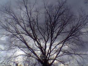 Удаление  дуба росшего возле дома 2