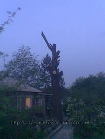 Удаление  дуба росшего возле дома 11
