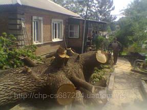 Удаление  дуба росшего возле дома 12