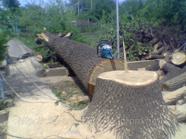 Удаление  дуба росшего возле дома