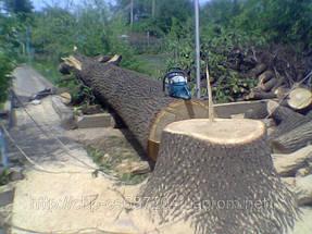 Удаление  дуба росшего возле дома 14