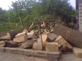 Удаление  дуба росшего возле дома 15