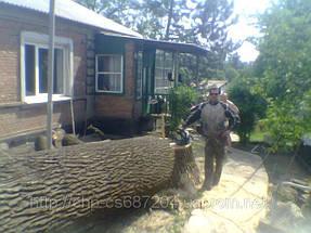 Удаление  дуба росшего возле дома 13