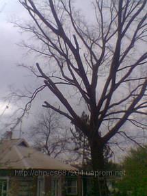 Удаление  дуба росшего возле дома 5