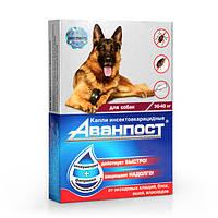 Аванпост инсекто-акарицидные капли на холку для собак 30-40 кг