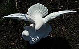 Скульптуры голубей. Скульптура из полимера Голуби 30*41 см, фото 10