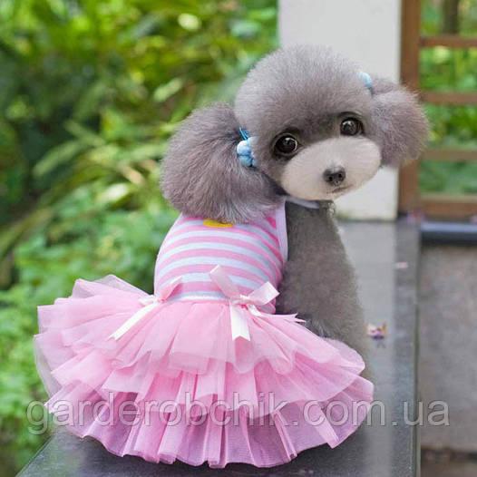 """Платье для собаки  """" С Цыпленком"""". Одежда для животных"""